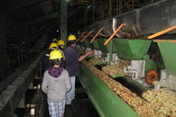 Tour at a nearby Coffee Processing Plant / Mill