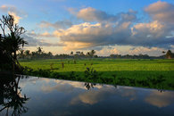 View of Rice Fields over Infinity Pool