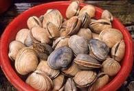 The beach yields bounties of manilla clams