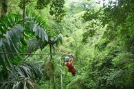 Zipline through the canopy and get up close and personal with nature!