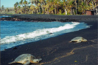 Aloha from The Black Sand Beach -  Hawaii