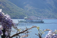 A romantic wisteria and the boat.