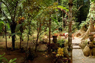 Format_3_2_thumb_manzanillo-limon-costa-rica-river-house-at-congo-bongo