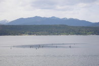 The South Shore at Union, Hood Canal