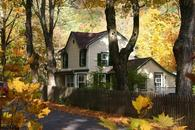 Fall foliage at