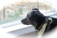 Dog mesmerized by the waterfalls at The Waterfall House a vacation rental home near Woodstock NY