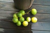Limes, Bula Vista, Savusavu, Fiji