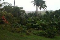 Bula Vista garden, Savusavu, Fiji